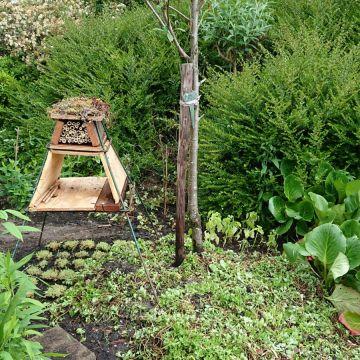 Op onze openbare tuin genaamd 'De Wijde Blick' (achter het clubhuis) wordt ook zoveel mogelijk aan Natuurlijk Tuinieren gedaan. Er wordt nog aan een aantal nieuwe insectenhotels gewerkt.