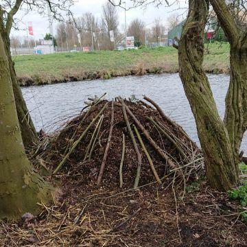 er is een broeihoop voor ringslangen gebouwd van takken, compost, paardenmest op een bechutte, zonnige plek aan het water