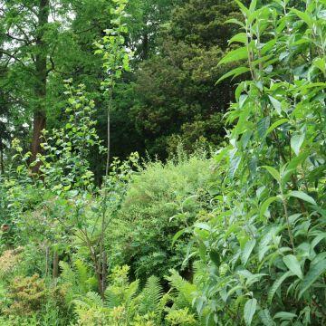 Op onze openbare tuin genaamd 'De Wijde Blick' (achter het clubhuis) wordt ook zoveel mogelijk aan Natuurlijk Tuinieren gedaan. Er staan verschillende vlinderstruiken die veel vlinders, bijen en andere vliegende insecten van nectar voorzien.